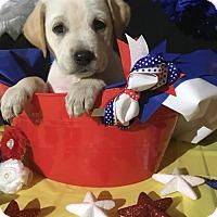 Adopt A Pet :: Judy Hopps - New Port Richey, FL
