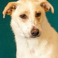 Adopt A Pet :: beverly - Johnson City, TN