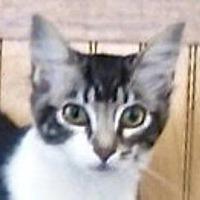 Adopt A Pet :: River - Davis, CA