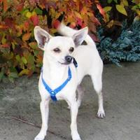 Adopt A Pet :: Fez - Central Point, OR