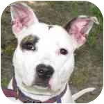 Terrier (Unknown Type, Medium) Mix Dog for adoption in Eatontown, New Jersey - Daisy