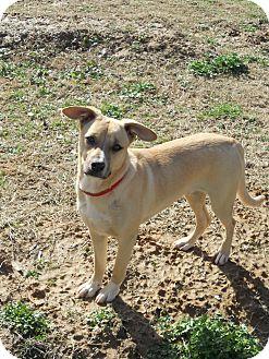 Hound (Unknown Type) Mix Dog for adoption in Austin, Arkansas - Auri