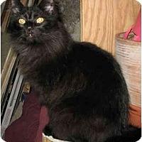 Adopt A Pet :: Pumpkin - Cincinnati, OH