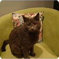 Adopt A Pet :: Shadow - Muncie, IN
