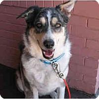 Adopt A Pet :: Mija - Scottsdale, AZ
