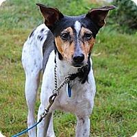 Adopt A Pet :: Maya - Concord, NH