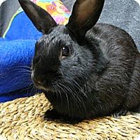 Adopt A Pet :: Bryant - Newport, DE