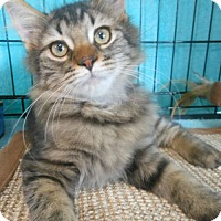 Adopt A Pet :: Jeffrey - Reston, VA