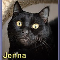 Adopt A Pet :: Jenna - Aldie, VA