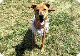 Labrador Retriever Mix Dog for adoption in Lexington, North Carolina - JOSIE