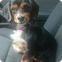Adopt A Pet :: Hero - Sugarland, TX