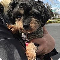 Adopt A Pet :: Dory - Oakley, CA