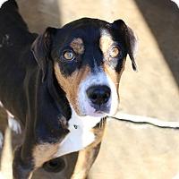 Adopt A Pet :: Grace - Pompton Lakes, NJ