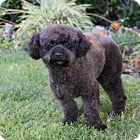 Adopt A Pet :: ROYCE - Newport Beach, CA