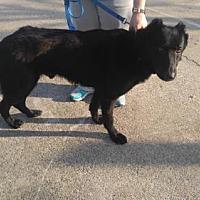 Adopt A Pet :: Knight - Morrisville, NC