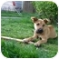 Photo 3 - Shepherd (Unknown Type) Mix Puppy for adoption in Portland, Oregon - Cha Cha