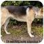 Photo 4 - German Shepherd Dog Dog for adoption in Los Angeles, California - Memphis von Mandelbaum