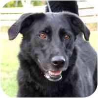 Labrador Retriever Mix Dog for adoption in Coleraine, Minnesota - Adia