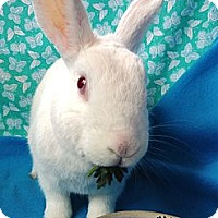 Adopt A Pet :: Rita - Huntsville, AL