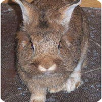 Adopt A Pet :: Thumper - Williston, FL