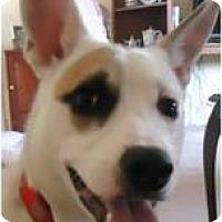 Adopt A Pet :: Sweetheart - Beachwood, OH