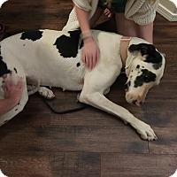 Adopt A Pet :: Liliana - Albuquerque, NM