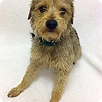 Adopt A Pet :: Bowser - Mission Viejo, CA