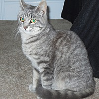 Adopt A Pet :: Lily - Burgaw, NC