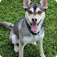 Adopt A Pet :: Max - Dunkirk, NY