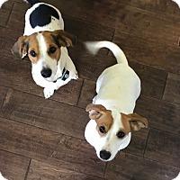 Adopt A Pet :: Marla and Brando-courtesy post - Schaumburg, IL