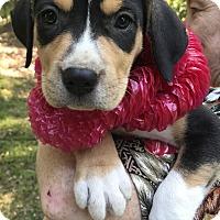 Adopt A Pet :: Ellie Mae - Glastonbury, CT