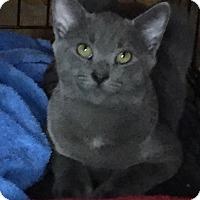 Adopt A Pet :: Sam - Barrington, NJ
