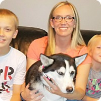 Adopt A Pet :: Mera (Dolly) - Plain City, OH