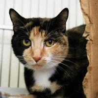 Adopt A Pet :: Masha - Auburn, AL