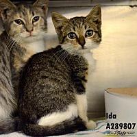 Adopt A Pet :: IDA - Conroe, TX