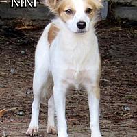 Adopt A Pet :: Kiki - Lindsay, CA