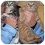 Photo 4 - Domestic Shorthair Kitten for adoption in Randolph, New Jersey - Pooh BEAR and Little Eeyore