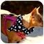 Photo 4 - Miniature Pinscher Dog for adoption in Woodstock, Georgia - Daisy