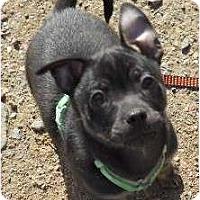 Adopt A Pet :: Frisky - dewey, AZ