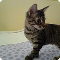 Adopt A Pet :: Dolly - Modesto, CA