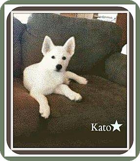 German Shepherd Dog Puppy for adoption in New Richmond,, Wisconsin - Kato