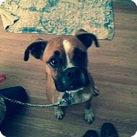 Adopt A Pet :: Abby Rose - McDonough, GA