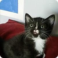 Adopt A Pet :: Roxie - Fairborn, OH