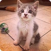 Adopt A Pet :: Austin - San Ramon, CA