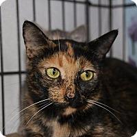Adopt A Pet :: Clariee (Semi feral) - Ann Arbor, MI