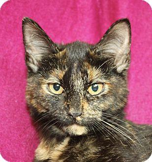 Domestic Shorthair Cat for adoption in Jackson, Michigan - Jewel