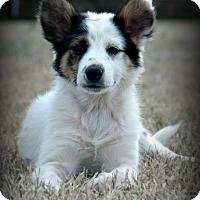 Adopt A Pet :: *Libby - PENDING - Westport, CT