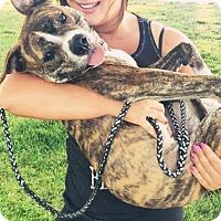 Adopt A Pet :: Lexi - Sacramento, CA