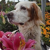 Adopt A Pet :: Kauai - Washington, DC