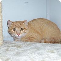 Adopt A Pet :: EVA - Medford, WI